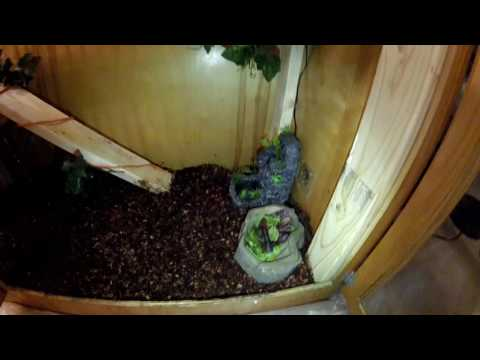 Building a GOOD Iguana Cage