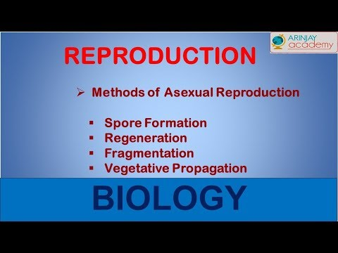 C code for fragmentation asexual reproduction