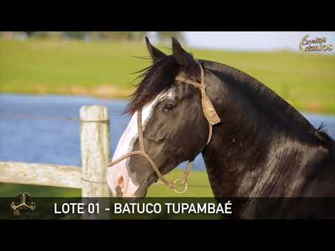LOTE 01   BATUCO TUPAMBAÉ