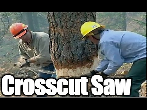 How To Use Crosscut Saw Safely and Effectively,Bucking log,How To