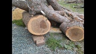 Заготовка древесины, часть следующая. вяз, ель, береза