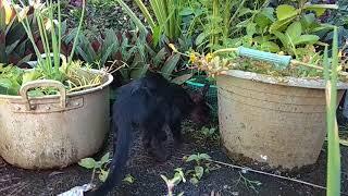Kucing Lucu   Funny cat