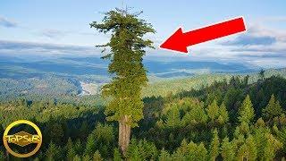20-มหัศจรรย์ต้นไม้ที่สูงและใหญ่รอบโลก-สุดยอด