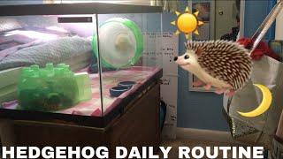 HEDGEHOG DAILY ROUTINE