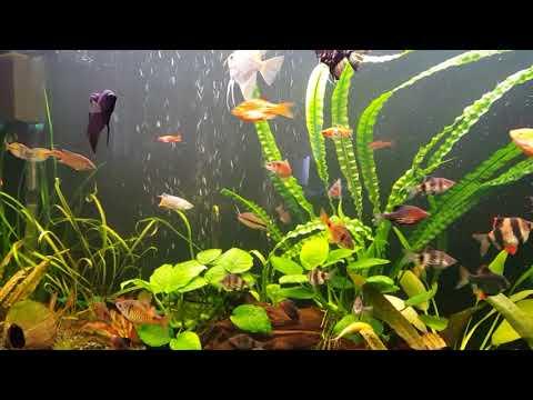 Бесшумный аквариум и бюджетное решение проблемы отключения электричества для аквариумов 240 и 60 л.