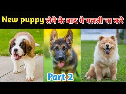 Things that remember after a Puppy /  New puppy लेने के बाद ये गलती ना करे / Part 2