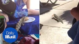 Cheeky iguana steals a little boy's burger before scuttling off - Daily Mail