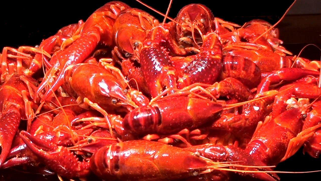 Cangrejos De Río Con Salsa De Tomate Crayfish In A Tomato Sauce