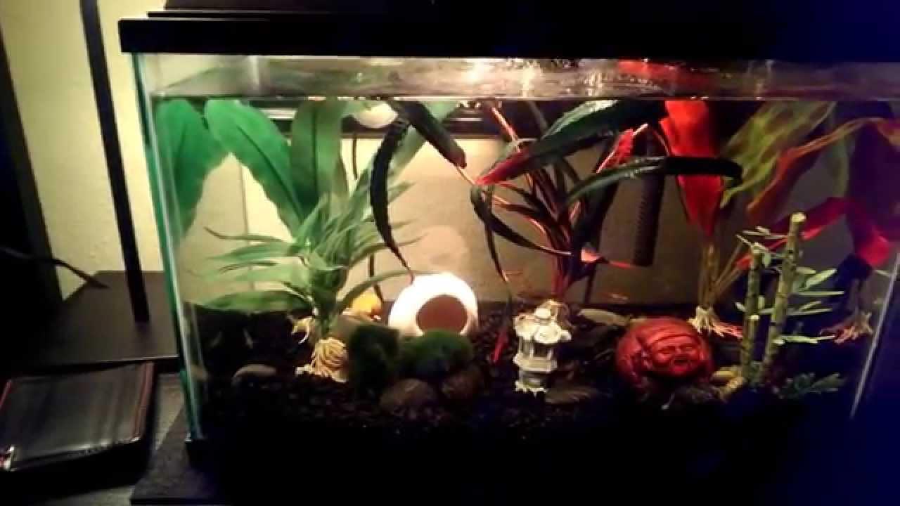 My betta fish stewie 39 s tank and his tank mates youtube for Tank mates for betta fish