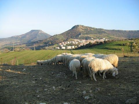 La Sardegna dei pastori il paesaggio della longevità
