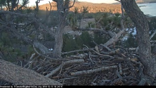 Big Bear Bald Eagle Nest Cam thumbnail