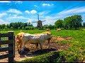 2017 Amstellanddag