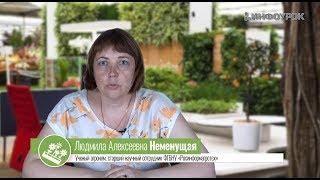 Организация производственно-технологической деятельности в области декоративного садоводства