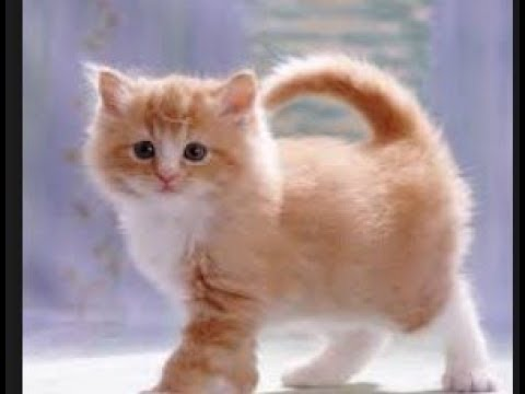 Funny Cats ,Try Not To Laugh , Challenge ,Funny Cute Kitten ,Funny Cat & Dog ,Vines ,compilation