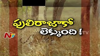 How Tiger Census are Conducted in Nallamala Forest || Special …