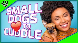 You'll Love These Small Dog Breeds That Love To Cuddle
