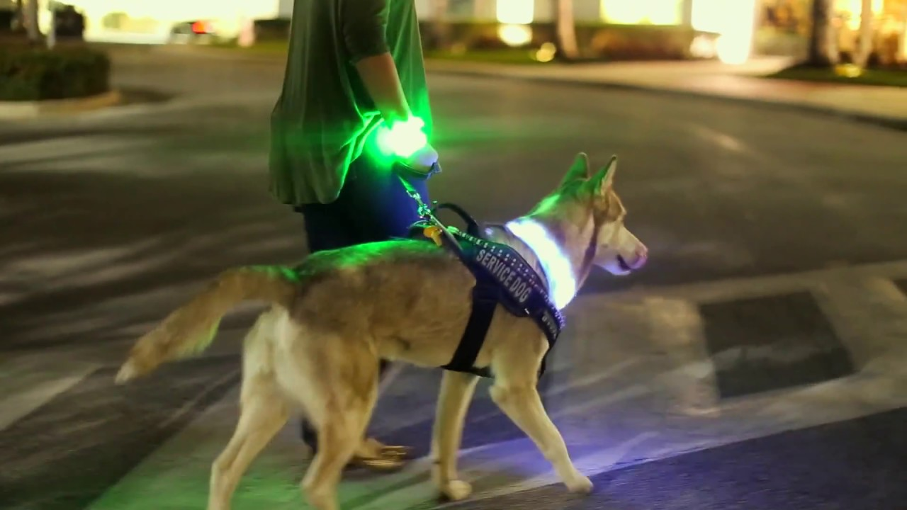 Brightest Led Dog Collars Halolights Youtube
