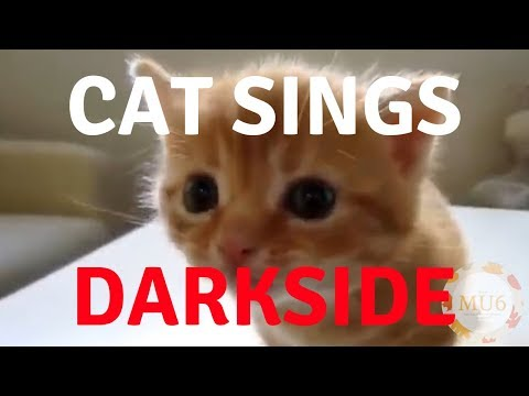 Cats Singing Song | Darkside By Alan Walker