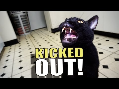 Thumbnail: Talking Kitty Cat 51 - Kicked Out!