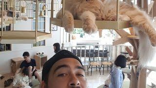 Tokyo - 07/07/2016 - Meiji Shrine, Yoyogi Park, Cat Cafe, Harajuku, Sushi, Tokyo Tower