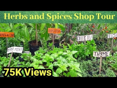 Murang Herbs And Spices Plants Saan Mabibili?