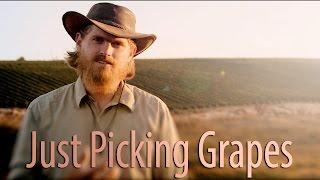 HaYovel   Just Picking Grapes