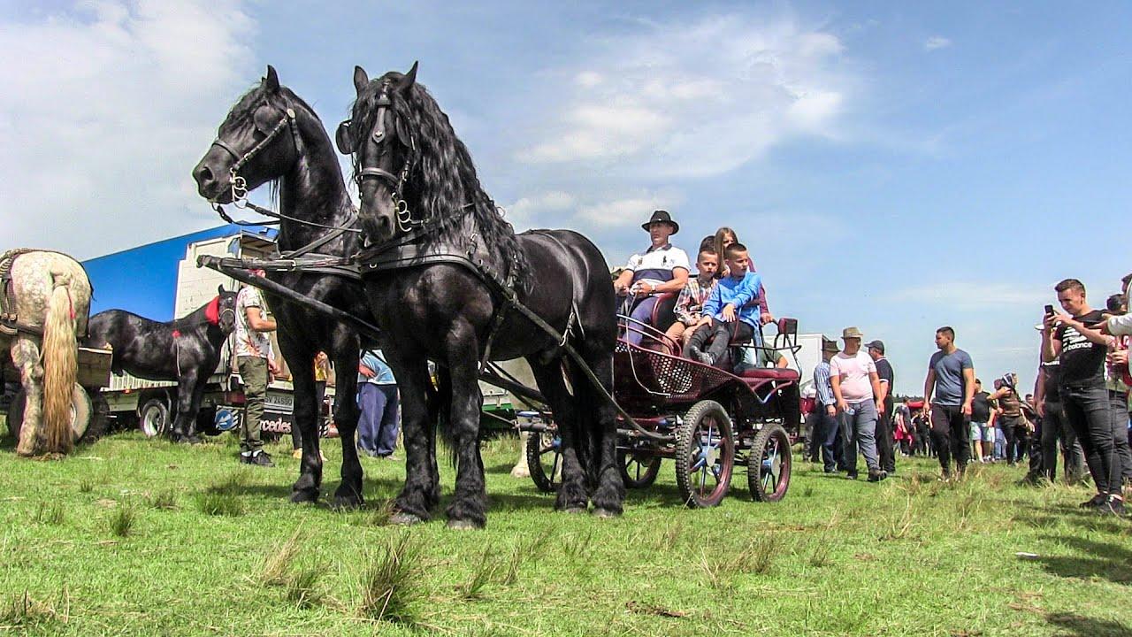 Cai frumosi 2020 Caii D-lui Pitter Horandau din Suceava