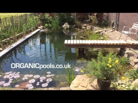 Dutch Family Flood Entire Garden - for an Organic Pool