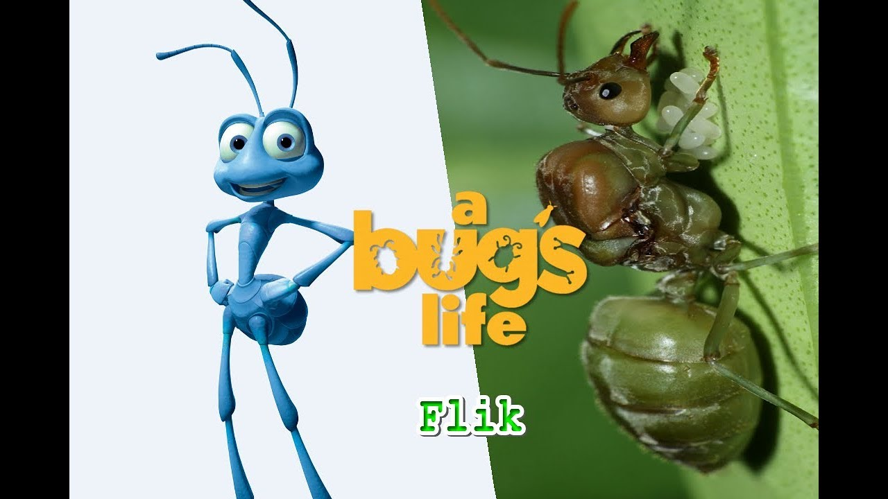 It's just a graphic of Exhilarating Characters in a Bug's Life