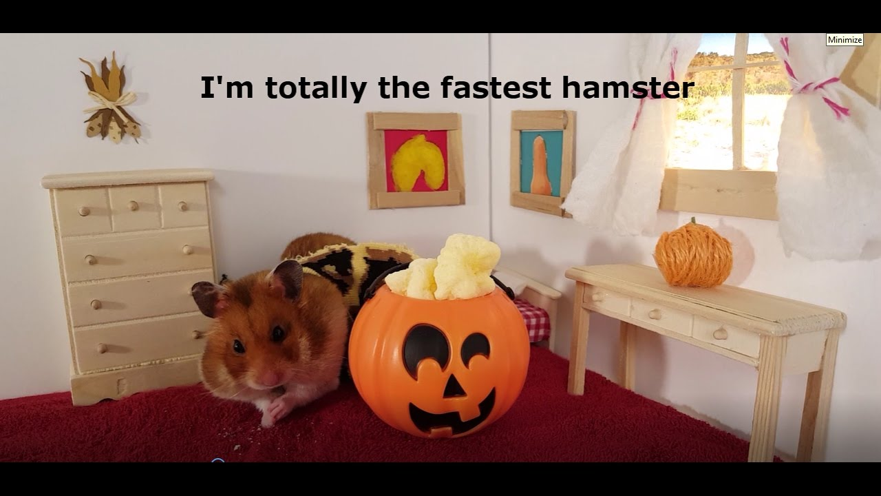 Cute Hamster in a Halloween Costume in a Tiny House & Cute Hamster in a Halloween Costume in a Tiny House - YouTube