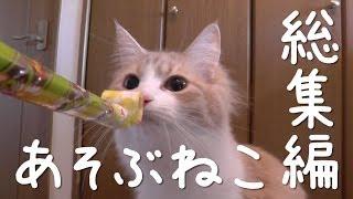 Yahooショッピングにて猫の脱走防止専門店《ねこ工房》を運営しています...