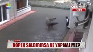 Köpek saldırırsa ne yapmalıyız?