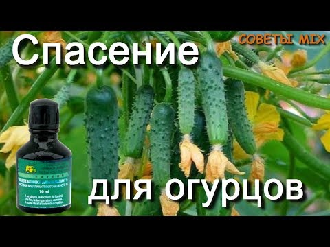 Народные средства лечения папилломы
