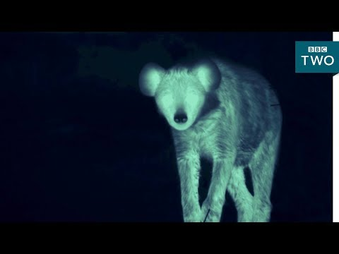 Download Youtube: Searching for hyenas at night - Tribes, Predators and Me: Series 2 Episode 3