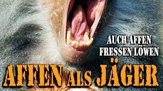 Affen als Jäger (2013) [Dokumentation] | Film (deutsch)