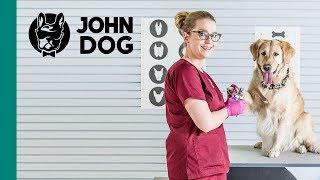 Pielęgnacja psa: pazury - ZDROWIE PSA - John Dog