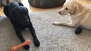 Olive and Mabel. Episode 2 - Game of Bones
