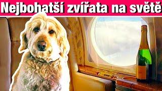 Nejbohatší zvířata na světě - Top.7