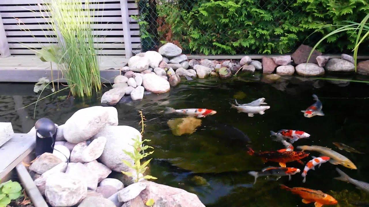 Small backyard koi pond youtube for Koi pond small