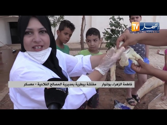معسكر   فحص الأضـ ـاحي بالأحياء يوم العيد مبادرة لتفادي أي مشكل عند الإستهلاك