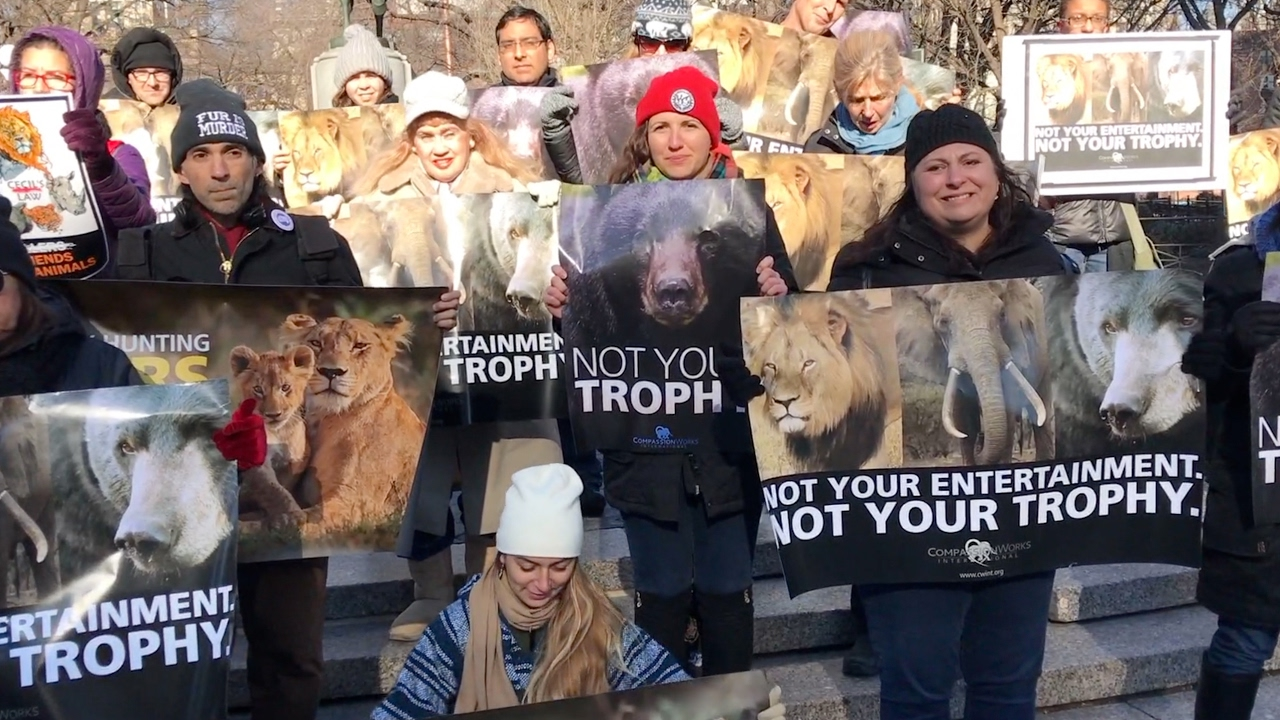 Download Global Rally for Cecil The Lion - NYC