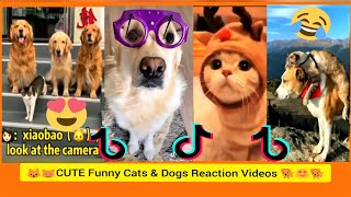 Funny Cats and Dogs Reaction Videos | Cute Funny moments Compilation 2021 | Try not to laugh