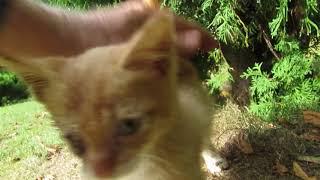 JAROMIN - DPS : kotek bez oka Placek  bawi się z autorem i bryka na trawce : 15.09.2018