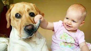 Ces bébés mignons feront fondre votre coeur - bébés drôles riant à la compilation d'ANIMAUX