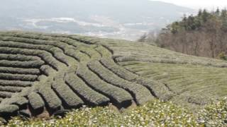 A visit to the Obubu Tea Farm in Wazuka, Kyoto, Japan