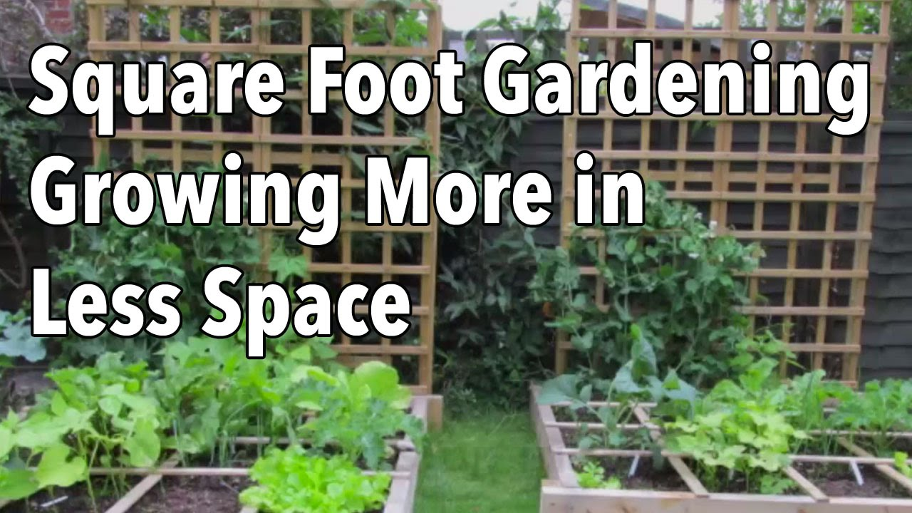 Square Foot Gardening (SFG): Growing More In Less Space   YouTube