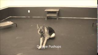 Before/after Video For B&t Trigger - Off Leash K9 Training, Charlottesville