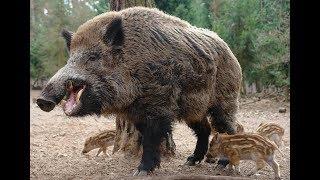 Животные мира Брачные игры Выбор самки Полевой лунь Ритуал союза Период гона След подруги Миг леса