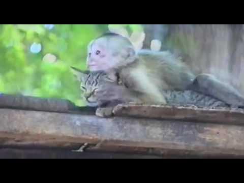 Кошка и Обезьяна трахаются