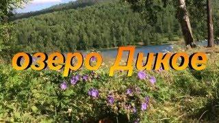 Сибирские озёра. озеро Дикое.